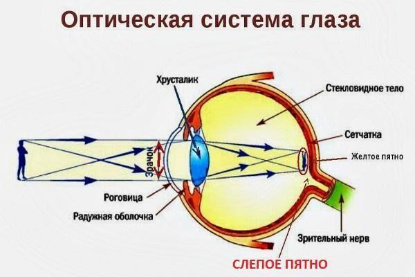 Схема слепого пятна