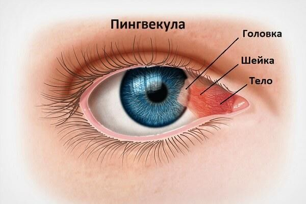 Пингвекула глаза