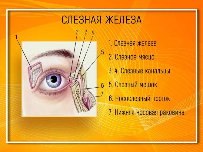 Резь и слезы в глазах причины и лечение