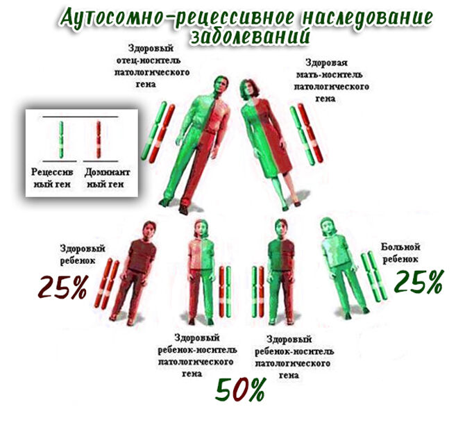 Аутосомно-рецессивное наследование заболеваний